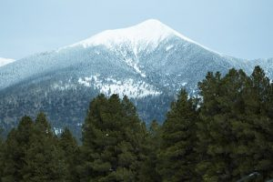 A snowy mountain and trees